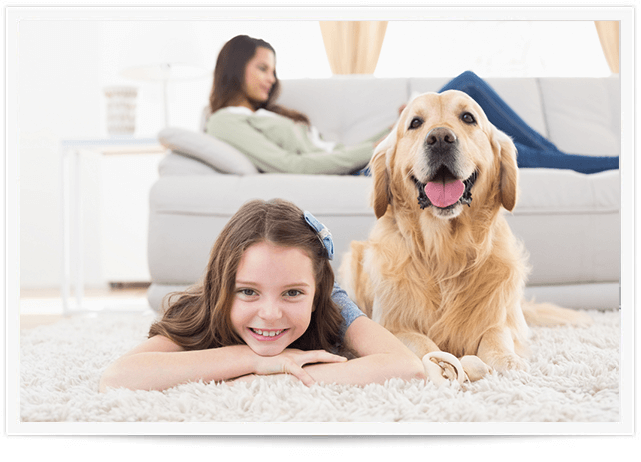 Pet Urine Removal Service in Orange County